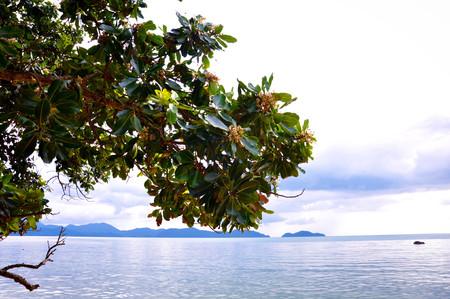 nurseries: The tree view on the sea