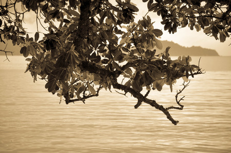 edibles: The tree view on the sea