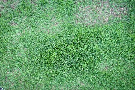 nurseries: green grass background