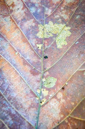 minutiae: dry leaf