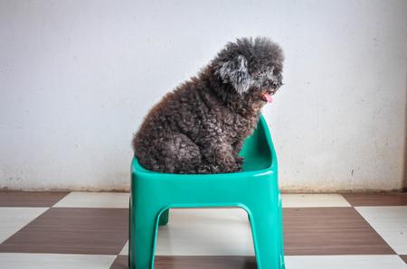 fussy: Dog