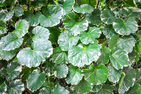fussy: green leaf background