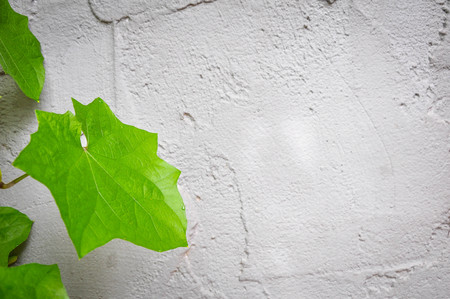 nurseries: plant grows side by wall