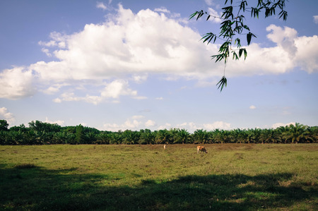 agricultural essence: Sevilla fields for summer