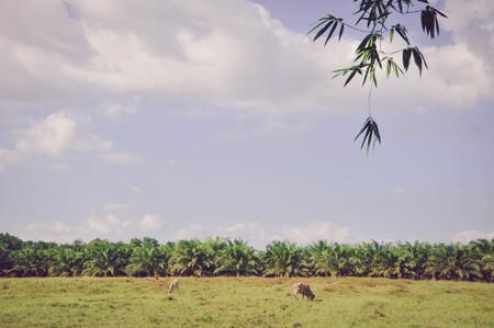 agricultural essence: Sevilla fields for summer