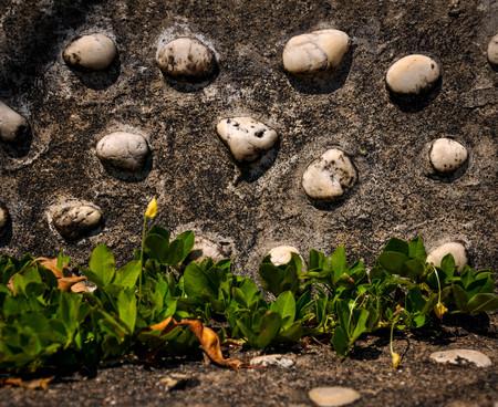 nurseries: Ivy on the cement floor Stock Photo
