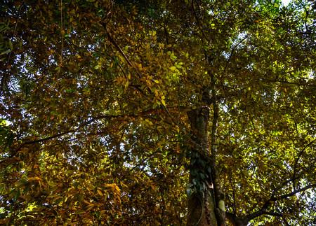nurseries: yellow leaves tree crown closeup