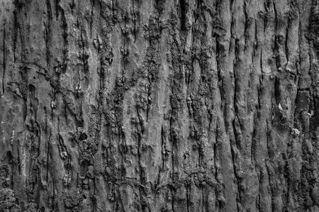 face in tree bark: Bark background