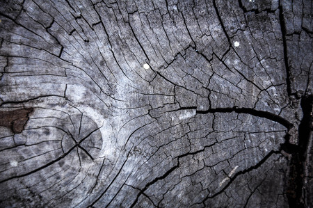 face in tree bark: wood background