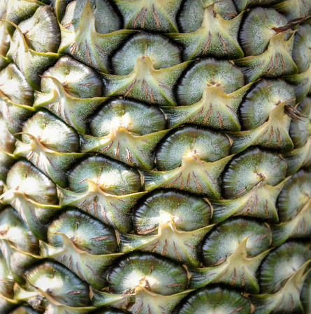 agricultural essence: Pineapple tropical fruit in a farm