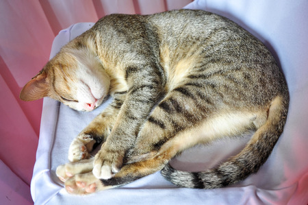 sleep cat Stock Photo - 60839543