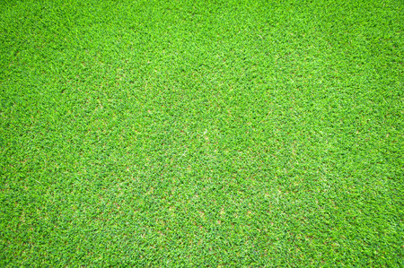 green grass background Stock Photo - 68096556