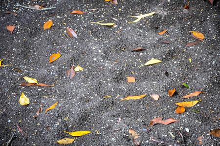 Leaves on black sand Stock Photo