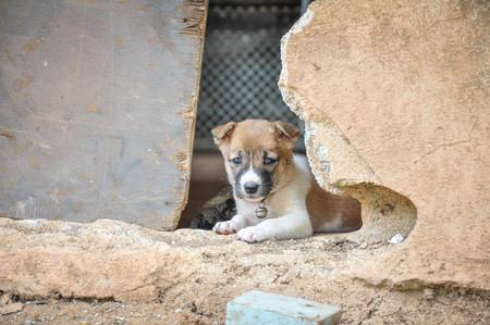 Baby hond Stockfoto