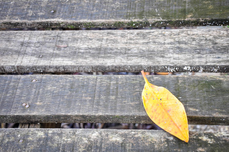 Yellow leaves on the wooden walkway Stock Photo