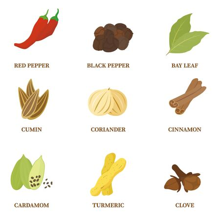 Spices and spices set : vector
