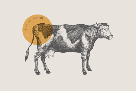 Retro graphic hand-drawn cow. For markets and shops. Vector vintage illustrations.
