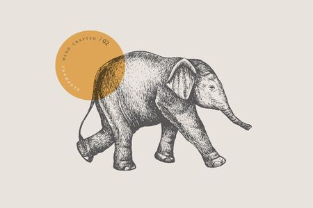 An image of a little Asian baby elephant drawn by graphic lines on a light isolated background. Vector illustration in engraving style.