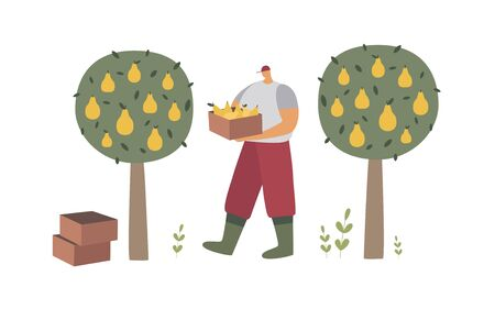 A man in work clothes and boots collects pears from trees. Agricultural work in the orchard. A farmer with the fruits of his labor. Ecotourism. Trendy flat vector illustration.