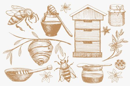 Collection of hand-drawn objects on theme of honey, apiaries and bee breeding. Jar of honey with spoon, bees, honeycombs, beehive and flowers. Organic healthy and healing nutrition.