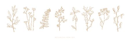 Set hand drawn grass and flowers on white isolated background. Trendy wildflowers and herbs. Botanical illustration. Decorative floral picture. 版權商用圖片 - 131956880