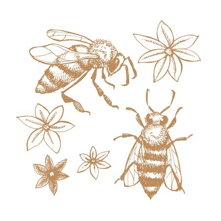 Hand drawn bees and flowers. Images on the theme of honey, apiaries and beekeeping. Vector illustration on a white isolated background.