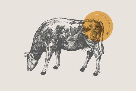 Grafische handgezeichnete Kuh auf hellem Hintergrund. Retro-Gravur mit Nutztier für Menürestaurants, zum Verpacken in Märkten und Geschäften. Vektor-Vintage-Illustrationen.