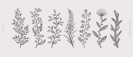 Big set of hand-drawn curly flowers. Wild herbs vector illustration. Floral design element for greeting card, poster, cover, invitation. Botanical retro image for a garden background. 矢量图像
