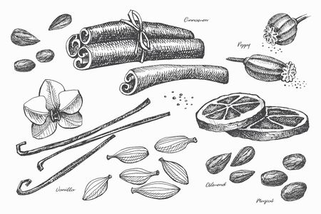 Hand drawn set of spices for cooking. Spicy spices: vanilla, poppy, cinnamon, cardamom, muscat and dried lemon on a light isolated background. Organic food concept. Vector illustration.