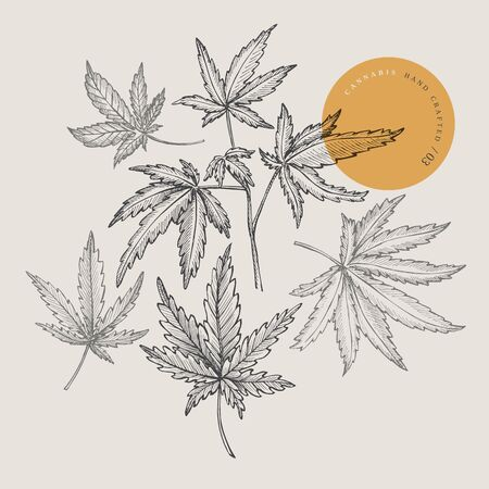 Set of hand-drawn cannabis leaf leaves on isolated background. Botanical sketch of marijuana. Vector illustration in retro style. Design element for your creativity, textiles, medicines, cosmetics.