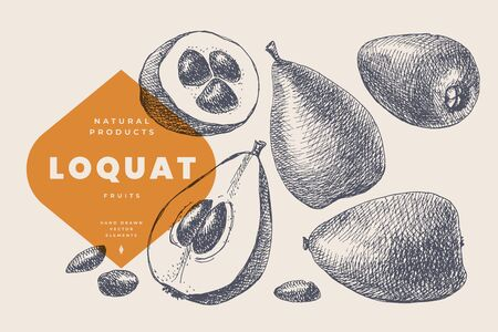 Hand drawn loquat or mushmula. Dessert and exotic fruit, whole and cutaway. Organic food concept. It can be used as an element of design of markets, menus and packaging. Vintage botanical illustration.