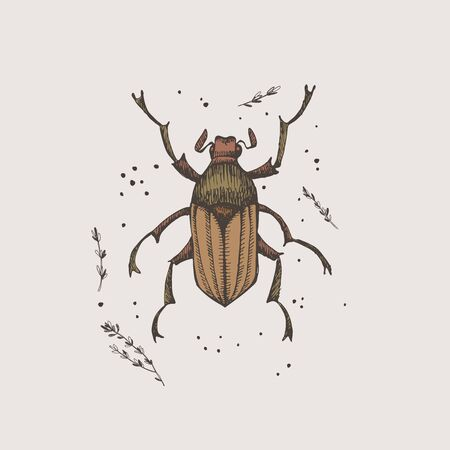 Hand-drawn chafer beetle on a light isolated background. Insect vector illustration in vintage style. Design element for zoological composition, poster, cover, brochure.