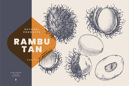 Hand drawn rambutan. Dessert and exotic fruits, sliced and whole. Organic food concept. Can be used for your design. Vintage botanical illustration on a light isolated background. 矢量图像