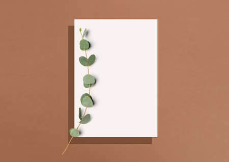 Mock up. Template for branding identity. Blank white paper and eucalyptus branch on a terracotta background with soft shadow. Flat lay. Top view. 3D illustration. 免版税图像