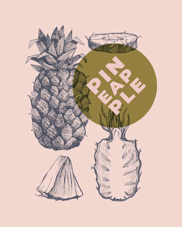 Hand drawn pineapple. Dessert and exotic fruits, sliced and whole. Can be used to design markets, menu and packaging. Organic food concept. Vintage botanical illustration on light isolated background. 矢量图像