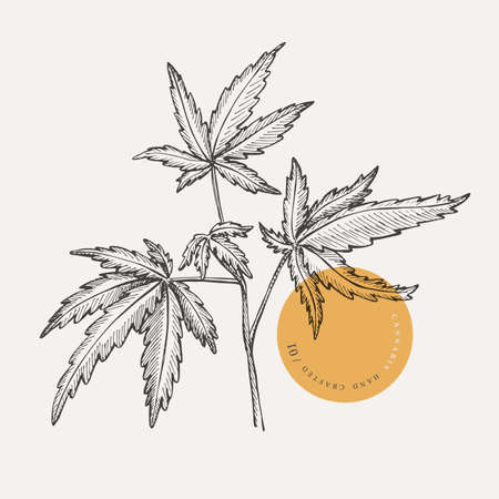 Hand-drawn cannabis branch on a light isolated background. Medicinal plant. Marijuana leaves for the design of textiles, drugs, cosmetics. Botanical vector illustration in retro style. 矢量图像