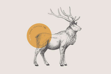 Hand drawing of a forest deer on a light background. Deer-Izyubr in vintage engraving style. 矢量图像