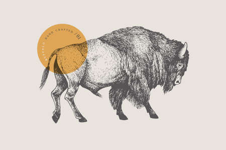 Hand drawing of American bison on a light background. Buffalo in vintage engraving style. 矢量图像
