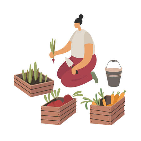 Care and cultivation of agricultural plants. The girl harvests beets, carrots and radishes in the garden. Agricultural labor and ecotourism. Trendy flat vector illustration.