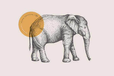 Image of a large African elephant, drawn by graphic lines on a light background.