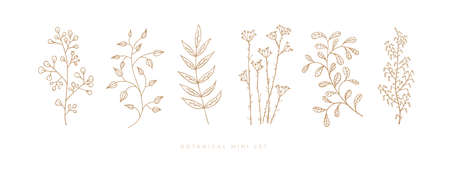 Set hand drawn curly grass and flowers on white isolated background. Trendy wildflowers and herbs. Botanical illustration. Decorative floral picture.