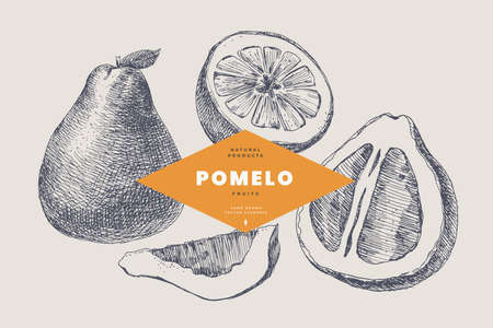 Hand drawn pomelo. Citrus and dessert fruits, sliced and whole. 矢量图像