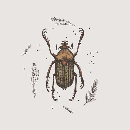 Hand-drawn chafer beetle on a light isolated background.