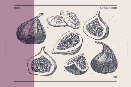 Hand-drawn figs. Dessert and exotic fruits, whole and cut. 矢量图像
