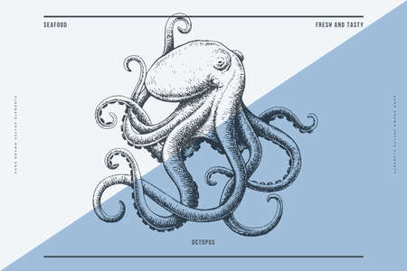 Hand-drawn image of an octopus on a light background. Stock Illustratie