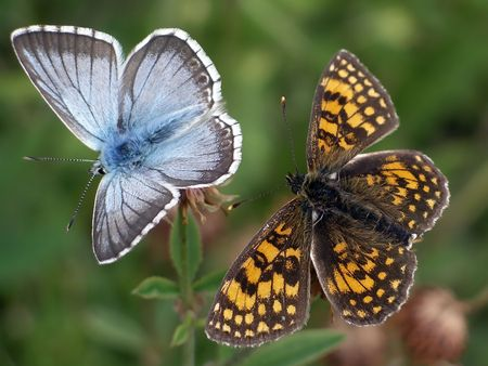 Two different butterfly close together
