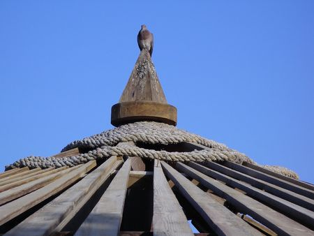 columb: Pigeon on a wooden roof