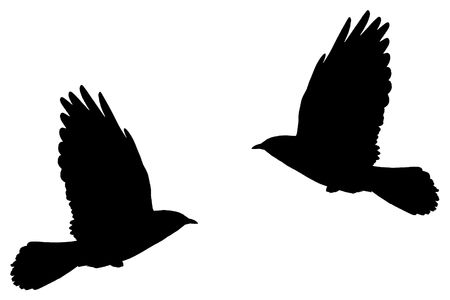 daw: Illustration from a silhouette of a flying daw
