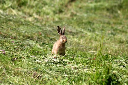 Young rabbit sitting in the gras like a easter rabbit photo