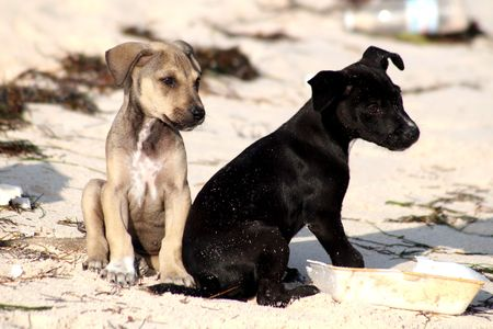 Two puppy dogs sitting in the sand Stock Photo